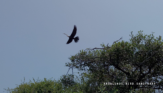 Kadalundi bird sanctuary, Kozhikode