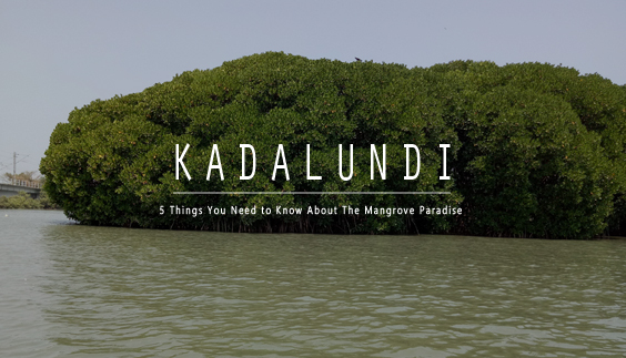 Kadalundi - 5 Things You Need to Know About The Mangrove Paradise
